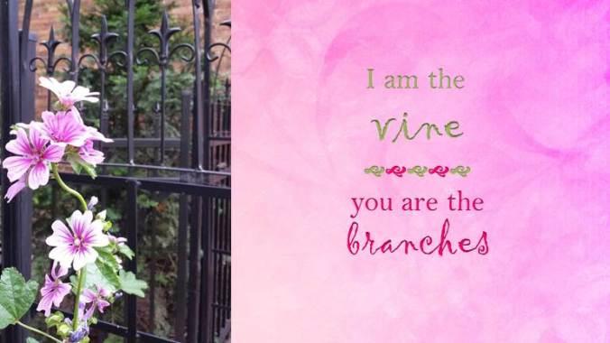 vinebranches