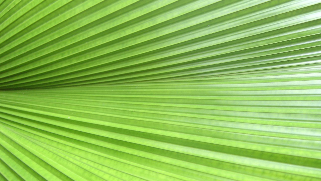 A leave (frond) @ mom's portico