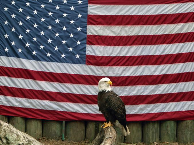 american-eagle-with-flag-1565088