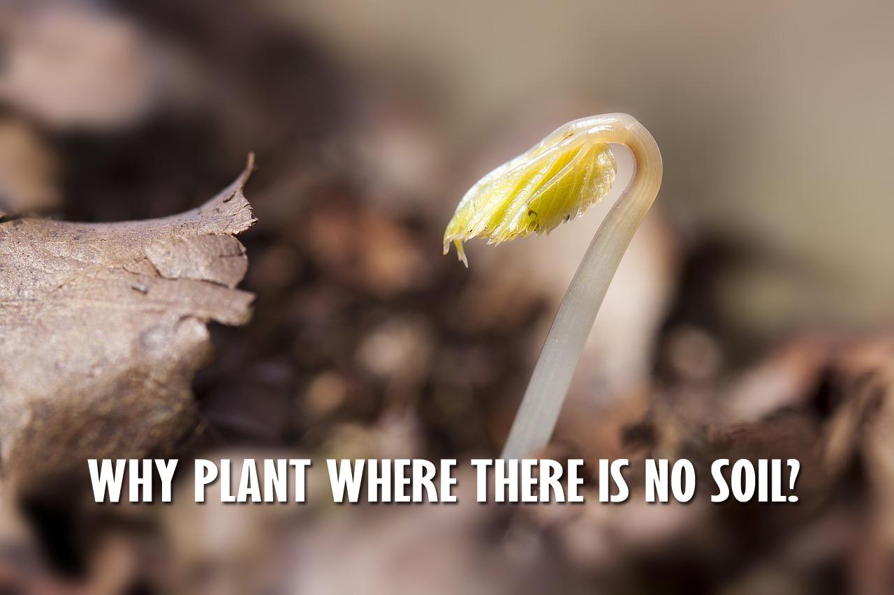 seedling-1284663_1280JJS