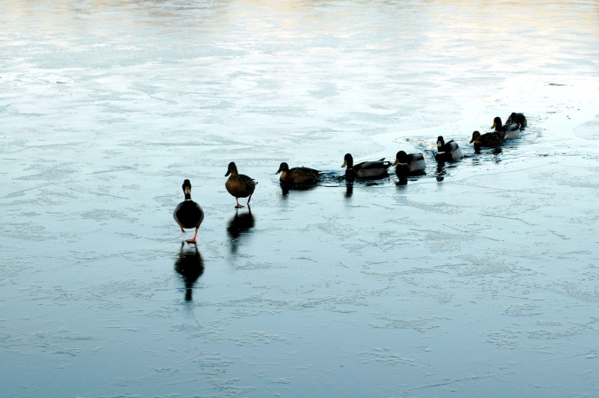 ducks-in-a-row-1316756-1598x1062