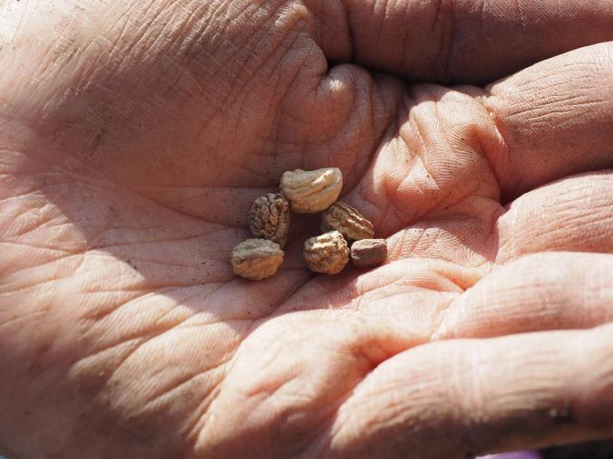 seeds-1117851_1920