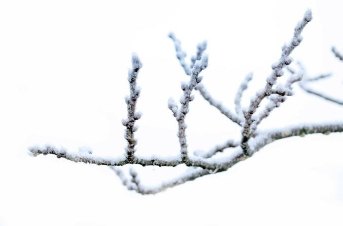 winter-83112_1280